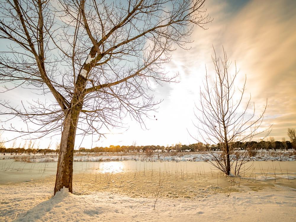 nevada Filomena